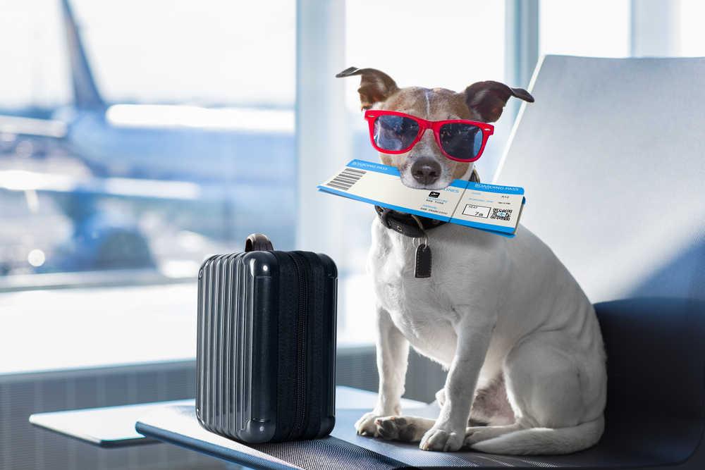Las aerolíneas adaptan sus servicios a las nuevas exigencias de los clientes